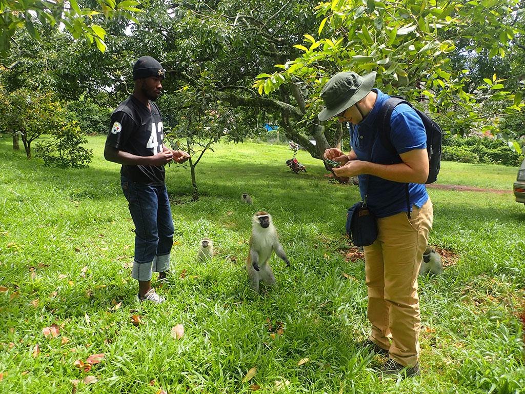Верветки в Ботанических садах Энтеббе